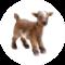 ticablog icon